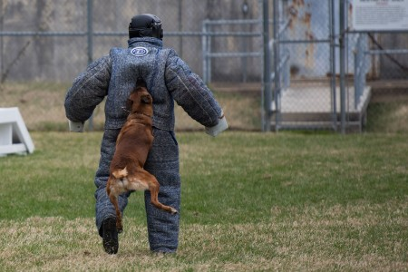 Soldiers demonstrate the capabilities and skills of military working dogs on Joint Base Myer-Henderson Hall, Va., March 6, 2018. The 947th Military Police Detachment, 3rd U.S. Infantry Regiment (The Old Guard), is the second largest MWD kennel in the Continental United States. The unit has assigned 24 MWDs with a variety of skills from Patrol Explosive Detection Dog, Patrol Narcotic Detection Dog and Specialized Search Dog.