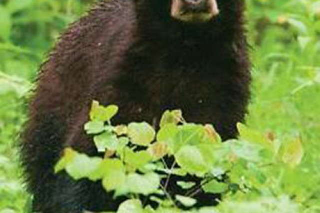 """The Missouri Department of Conservation encourages people to """"Be Bear Aware"""