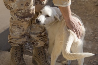 Erby of Iraq: Soldier to reunite with stray dog she adopted while deployed