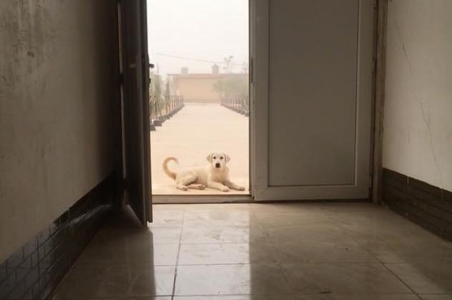 Erby the dog waits for some belly rubs on the front step of Sgt. Tracy McKithern's sleeping quarters in the Kurdistan Training Coordination Center (KTCC) near Erbil, Iraq, Nov. 4, 2017.