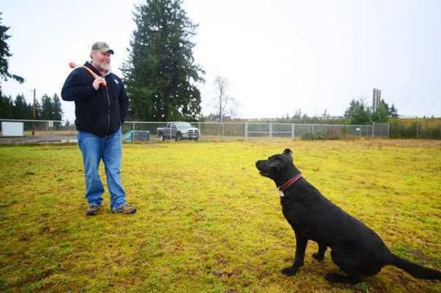 Retired Sgt. Dennis Dow plays with former military working dog Jag, his now-12-year-old black Labrador retriever, at the JBLM Dog Park Jan. 10, 2014, shortly after adopting him.