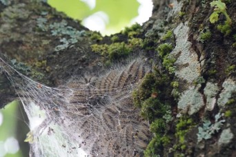 Don't let a caterpillar ruin your summer adventures