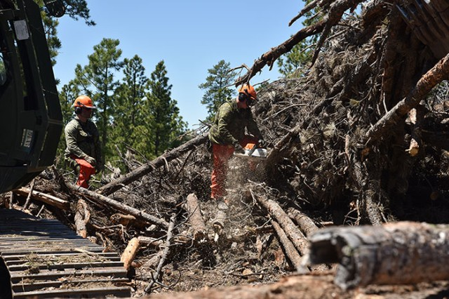 Soldiers from the 137th Transportation Company, Kansas Army National Guard and a soldier from Task Force 38, Canadian Army, cut timber to length to be hauled to Pine Ridge and Rosebud Reservations during the Golden Coyote training exercise's annual timber haul mission near Custer, S.D., June 12, 2018. This humanitarian mission fosters positive relations between the National Guard and Native American communities.