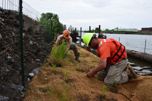 USACE Buffalo contractors planting native species along the Buffalo River bank as part of an ecosystem restoration project, June 25, 2018.