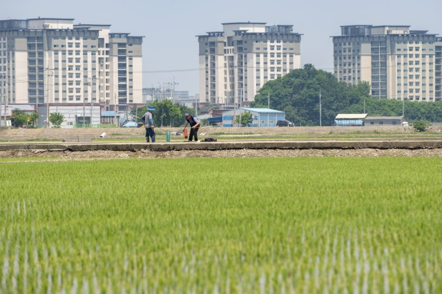 South Korean rice farmers check on their crops as housing towers stand in the background at Camp Humphreys on June 3, 2018. Nearly 700 new construction projects have already been built on the installation, which also include a new post exchange and commissary, medical facilities, fitness centers and schools.