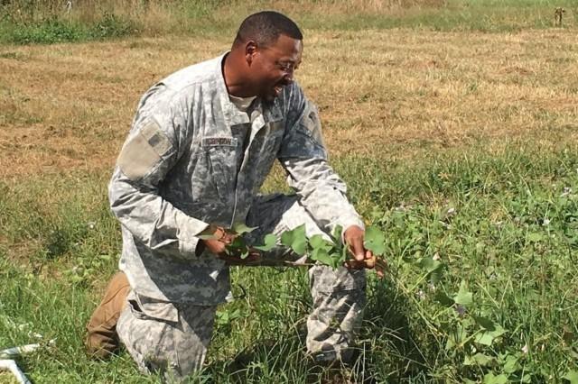 U.S. Army veteran Tim Robinson, a farmer in South Georgia, checks on his sweet potato crop. (U.S. Army courtesy photo)