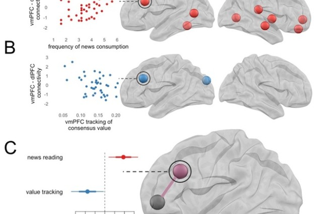 The researchers looked specifically at the brain's ventromedial prefrontal cortex, or vmPFC, which supports judgments about how valuable something is. Less frequent news reading was associated with lower connectivity of vmPFC with several brain regions, including several regions associated with executive function tasks.