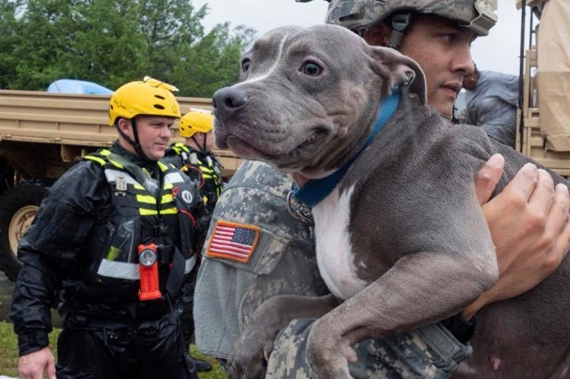 A U.S. Army Soldier rescues a dog during Hurricane Florence response operations. Knowing that pets are part of the family, Soldiers are working to evacuate them along with residents affected by the storm.