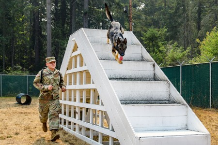 A military working dog handler with 95th Military Working Dog Detachment, 42nd Military Police Brigade, sprints through the obedience course with his dog Greco on Joint Base Lewis-McChord, Wash., Aug. 22, 2018.