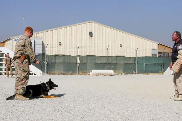 "Specialist Austin Lancaster (middle), native of Amarillo, Texas and military working dog handler for the 180th Military Working Dog Detachment at Fort Leonard Wood, gives Larry, his working dog, the command to 'lie down,' after ""subduing"" an AMK9 contractor wearing a bite sleeve during the controlled aggression portion of the K9 Competition here on Bagram Airfield, Afghanistan. The K9 competition, held September 16, 2018, consisted of four events: detection, obedience, agility and controlled aggression. In each event, the working dog teams were evaluated on their expedience to complete the task, their accuracy, their focus and their obedience to their handler's commands. Based on these evaluations, the nine working dog teams (three U.S. Army teams and six AMK9 contractor teams) were awarded corresponding points and the team that ended up with the most points won. (U.S. Army photo by: Staff Sgt. Caitlyn Byrne, 101st Sustainment Brigade Public Affairs)"