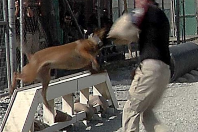 "This dog makes an attack on an ""enemy"" during a two-day K9 competition in mid-September at Bagram Airfield, Afghanistan. (Video image by Jon Micheal Connor, Army Public Affairs)"
