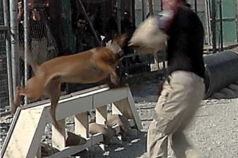 Dogs noses key to security regarding detection of explosives in Afghanistan