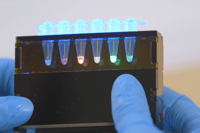 The kits are based on freeze-dried molecules that, when a DNA template and water are added, produce fluorescent proteins that can be viewed using a simple, handheld device.