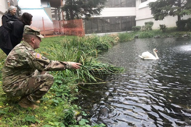 """Madigan Army Medical Center Commander Col. Thomas Bundt says goodbye to the mute swan that has served as the latest in a line of male swans known as """"Lewi"""" in the Madigan Pond since the first mated pair arrived in 1993. Lewi returns to the farm in Utah where he was born to live out his days with other swans. Here he takes one of his last Madigan swims on Joint Base Lewis-McChord, Wash. on Oct. 23."""