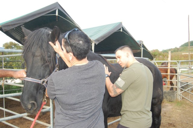 Sgt. Ivan Cervantes, Animal Care Non-commissioned officer at Vicenza Veterinary Treatment Facility, is conducting an exam on a horse with the help of Maj. Renee Krebs, Veterinary Medical Center Europe Deputy Director.