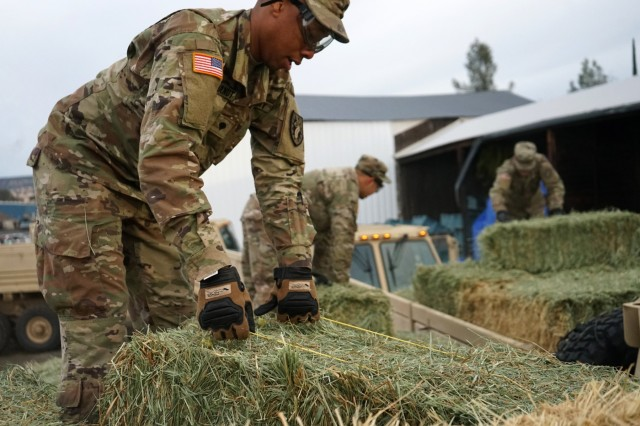 Soldiers from the California Army National Guard's 2632nd Transportation Company load hay into their trucks at a warehouse in Oroville, California, Nov. 26, 2018. The Transportation Company was brought in to carry critical supplies to area residents impacted by the deadly Camp Fire.