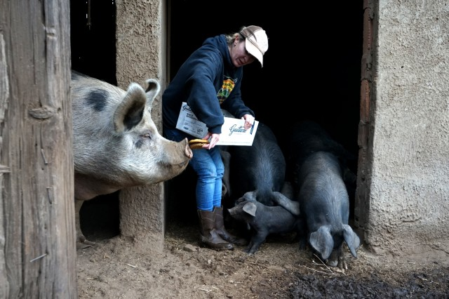 Rancher Megan Brown feeds her pigs at her ranch outside of Paradise, California, November 28, 2018. Brown, a sixth generation rancher, stayed on her land when the deadly Camp Fire swept through, rather than leave her animals at risk.