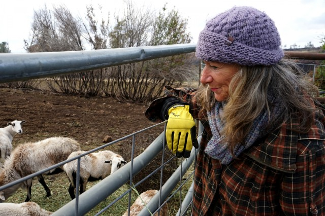 Deborah Damonte looks over her sheep at her ranch in Paradise, California, Nov. 28, 2018. Damonte, who was unable to evacuate during the deadly Camp Fire, watched from the roof of her house and extinguished flying embers with buckets of water.