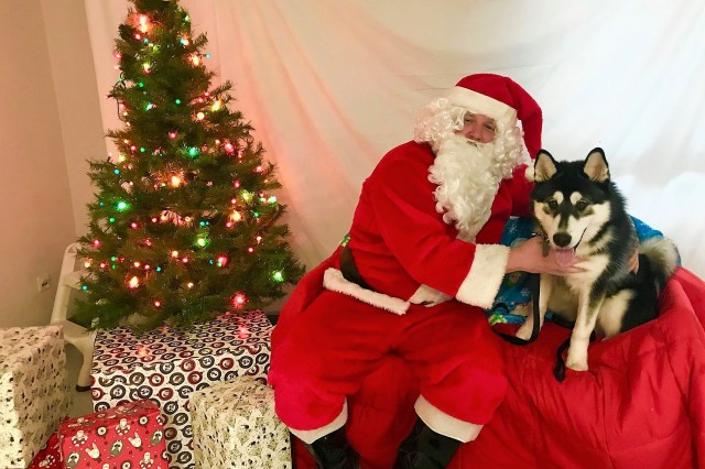 This was the first time that Odin, a Siberian husky, met Santa Paws
