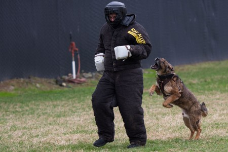 Soldiers demonstrate the capabilities and skills of the Military Working Dogs on Joint Base Myer-Henderson Hall, Va., March 6, 2018. The 947th Military Police Detachment, 289th MP Company, 4th Battalion, 3rd U.S. Infantry Regiment (The Old Guard), is the second largest MWD Kennel in the Continental United States.