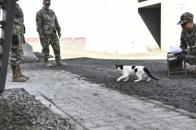 The 380th Expeditionary Civil Engineer Squadron pest management team release a newly vaccinated and spayed cat at Al Dhafra Air Base, United Arab Emirates, Feb. 18, 2019. In addition to routine insect and rodent control duties, Pest Management personnel apply a variety of devices and techniques to deter birds from airfields and surrounding buildings and areas.