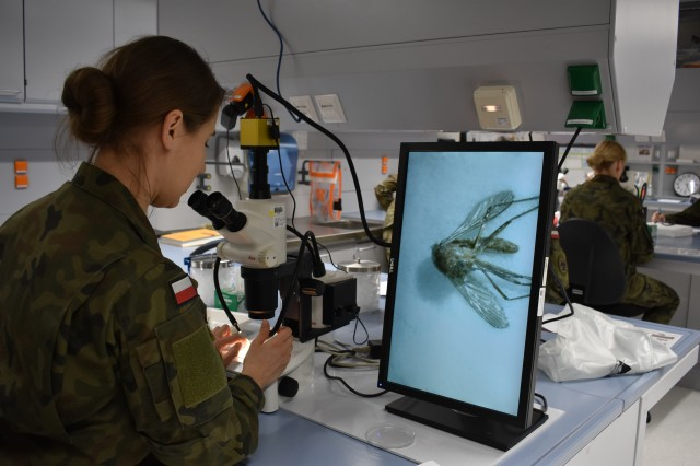 An officer of the Polish ERC team is examining a mosquito under the microscope.