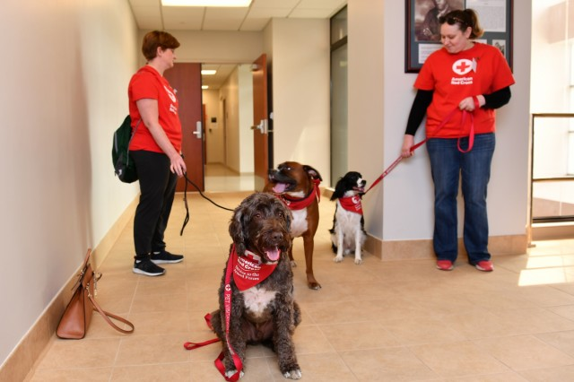 Red Cross pet therapy mends ruff times