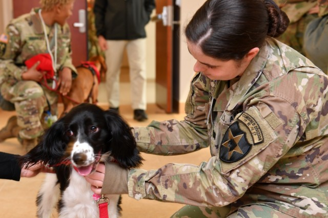 CAMP HUMPHREYS, Republic of Korea - Capt. Catherine Felder, Strongsville, Ohio native, engineer officer, 2nd Infantry Division/ROK-U.S. Combined Division, pets Avery May, a two-year-old English Springer, and member of the Camp Humphreys American Red Cross dog team at Freeman Hall, March 28. American Red Cross dog teams visited the Warrior Division to bring joy and comfort to Soldiers during the workday.