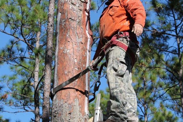 Fort Stewart/Hunter Army Airfield installs artificial cavities in longleaf pine trees to assist in the management and continued growth of its red-cockaded woodpecker population.