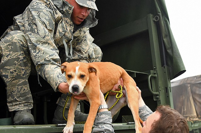 Airmen with the 159th Fighter Wing practice safe animal handling techniques with a dog from the St. Bernard Parish Animal Shelter, during a disaster response exercise at Myrtle Cove Marine in Port Sulphur, April 5, 2019. Louisiana National Guardsmen also trained in Sterlington and Natchitoches to assist local and state agencies in the transportation of stranded citizens and animals during a natural disaster.