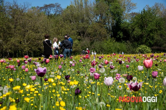 The annual Giardinity flower festival takes place in Vescovana (Padova) through April 25.