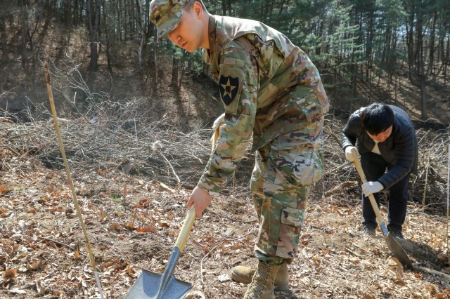 Korean Augmentation to the United States Army Pfc. Ahn, Sung-chul, 210th Field Artillery Brigade, prepares to plant trees during the 74th Annual City Hall Arbor Day celebration at Tapdong Elementary School, April 5, 2019, Dongducheon, Republic of Korea. While supporting U.S. Forces Korea's Good Neighbor Program, 210th FAB Soldiers and DDC citizens planted trees together to help enhance friendships and strengthen the ROK-U.S. Alliance. (U.S. Army photo by KATUSA Cpl. Jang, Taemin)