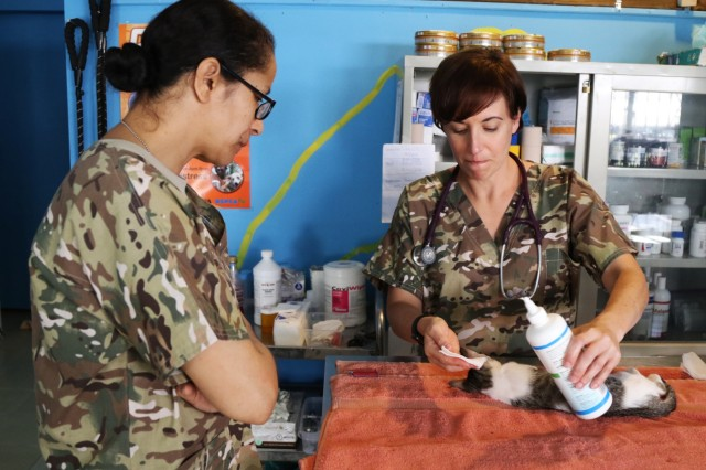 Capt. Shareen Burton, a veterinarian with the 445th Civil Affairs Battalion cleans the ears of a kitten at a veterinarian outreach program at the Palau Animal Welfare Society(PAWS) April 15, 2019 in Koror, Palau during Exercise Palau. U.S. Army veterinarians and PAWS have partnered to aid the community in providing basic animal health care for pets. Exercise Palau is sponsored by U.S. Army Pacific and hosted by the nation of Palau, and strengthens the U.S. and Palau relationships, and contributes to a free and open Indo-Pacific. The exercise will run from the 13th - 19th, and will include several security cooperation training events as well as community and animal health outreach services at several sites including Koror, Peleliu and Angaur.