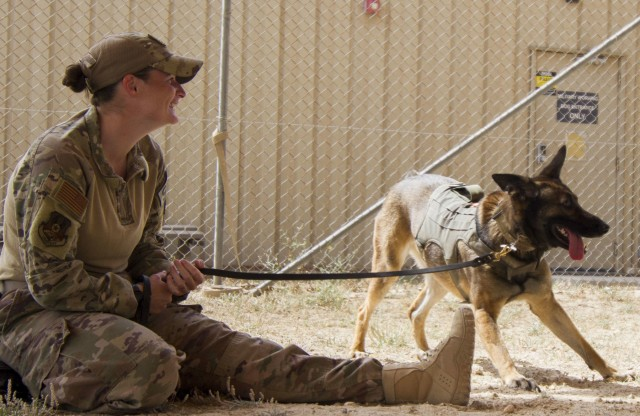 Military Working Dogs Conduct Decontamination Training in Kuwait