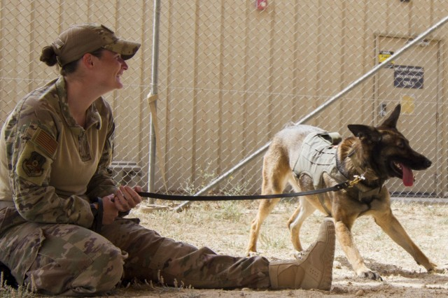 Air Force Staff Sgt. Porschia Easom, military working dog handler, 386th Expeditionary Security Forces Squadron, plays with her military working dog, Beki, a Belgian Malinois that does bite work and finds explosives, in preparation to conduct chemical, biological, chemical, or nuclear (CBRN) decontamination training in Kuwait April 11, 2019. Members of the 637th Chemical Company, the 719th Medical Detachment Veterinary Service Support, and the 386th Expeditionary Security Forces Squadron came together to conduct a live exercise to train to save the lives of military working dogs and their handlers in the event they were exposed to a CBRN substance. Live training events help prepare service members for real world events which may require them to recall the skills they learned in training to stay in the fight and survive.  (U.S. Army Reserve photo by Sgt. 1st Class Anaidy G. Claudio, U.S. Army Central Public Affairs Office)