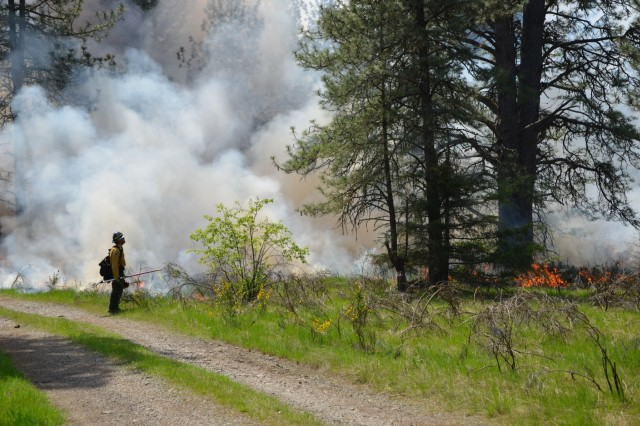 Nick Miller, Joint Base Lewis-McChord wildland fire program manager, watches the progression of the fire and smoke through Training Area 6 on JBLM, during a prescribed burn, May 9. (Photo by Lauren Finnegan, Joint Base Lewis-McChord Garrison Public Affairs)