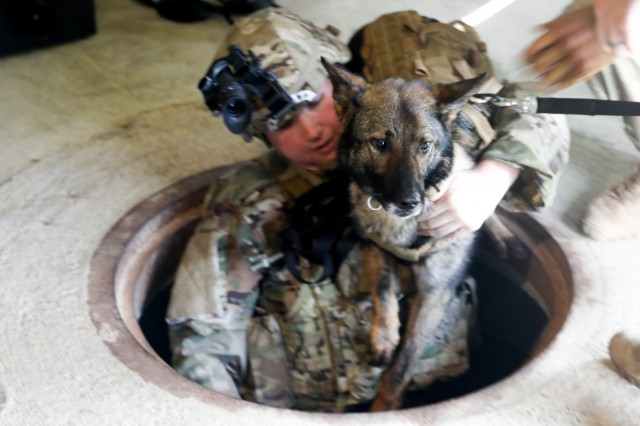 FORT BENNING, Ga. -- Spc. Garrett Alikakos, 904th Military Working Dog Detachment at Fort Benning, lifts military working dog Kicsi out of a tunnel. Fifteen military working dog teams from across the U.S. Army, including one from the Connecticut National Guard, perform tunnel training and urban building sweeps June 20, 2019 at Selby Combined Arms Collective Training Facility here. Military working dog teams are used in garrison and combat support missions, including area security, movement and mobility support operations; law and order; and force protection, including narcotic, human, landmine, firearm, ammunition and explosive detection. (U.S. Army photo by Markeith Horace, Maneuver Center of Excellence, Fort Benning Public Affairs)