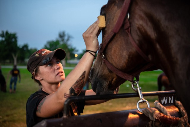 Spc. Randy Rogers, a Soldier assigned to 1st Battalion, 14th Field Artillery, uses a sponge to clean and care for her horse in preparation for a ceremony. Soldiers groom, feed, water, and muck their steeds daily to keep them in optimal health.