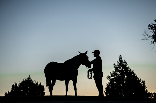 Soldiers selected for the Artillery Half Section serve a one-year tour at Fort Sill, Okla., providing them professional development and enhanced leadership skills, along with the opportunity to serve beside some magnificent horses.