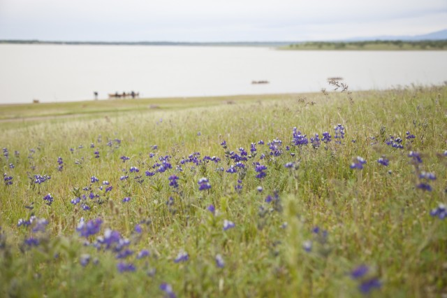 Wildflowers bloom at Black Butte Lake in April 2019.. (U.S. Army photo by Ken Wright)