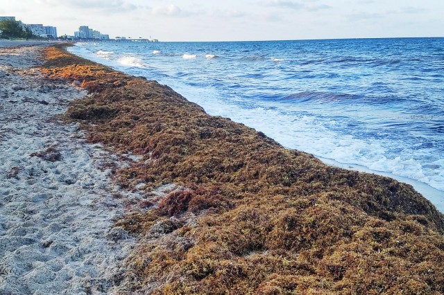 Brian Wood, safety specialist at the Fort Knox Safety Office, recalls his vacation trip to Pompano Beach, Florida, in May 2019, when he and his family encountered too much seaweed to safely swim in the Atlantic Ocean. He advises travelers to plan ahead to ensure a fun and safe vacation.