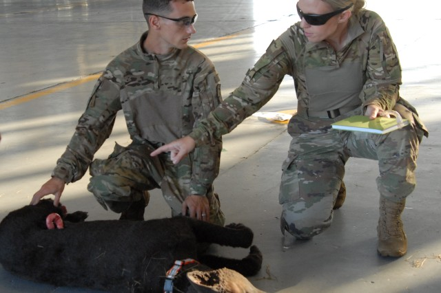 Captain Sarah Keller instructs Pvt. 1st Class Vasilica Stipetich on administering first aid on DIESEL, a 'mock' military working dog. In an actual emergency Stipetich would call in a 9-line to provide flight paramedics with details about the dog's injuries.