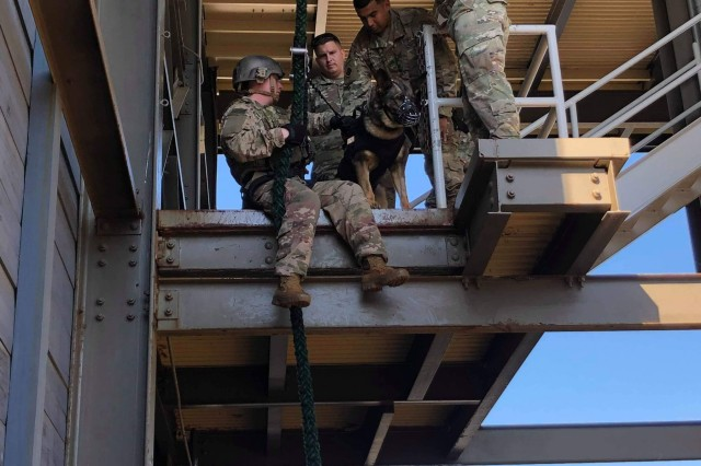 Sergeant Megan Hurley (center) and Military Working Dog Bill from the 510th Military Police Detachment (MWD) practice descending a rope with equipment during pre-deployment training. MWD teams must be physically and tactically fit in order to accompany units wherever they go in a tactical environment.  From providing unique patrol, explosives and narcotic detection capabilities through law enforcement on Fort Campbell, Kentucky to deploying into combat zones such as Iraq and Afghanistan, the 510th MP DET is staying busy. (U.S. Army photo by: 1st Lt. M. Austin Giles, 510th Military Police Detachment (MWD), 716th Military Police Battalion)