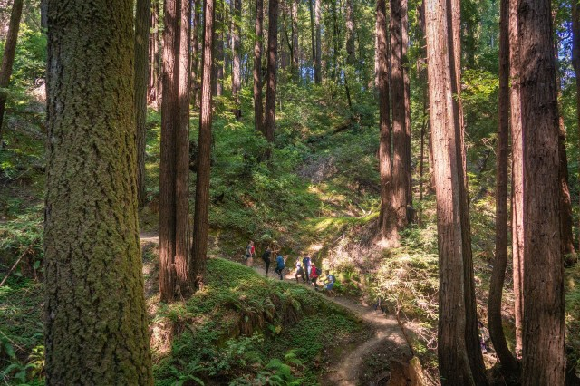 The forest towers above a group of service members and civilians during a 'Spiritual Fitness Hike' at Henry Cowell Redwoods State Park in Fulton, Calif., July 27, 2019.
