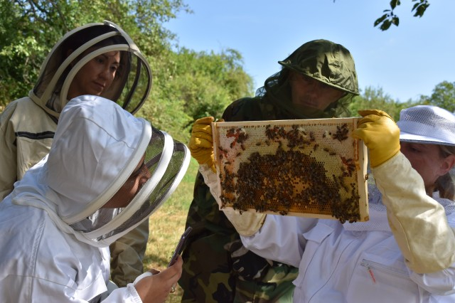 Staff of Public Health Command Europe inspecting the honeycombs and looking for the queen bee.