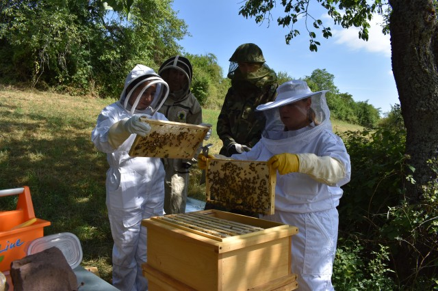 Public Health Command Europe staff inspecting the honeycombs for bee larvae.