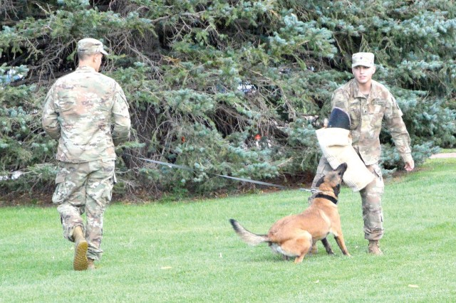 FORT CARSON, Colo. - Sgt. Joseph Stowers, team leader, 69th Military Police Detachment, 759th Military Police Battalion, provides commands to Carman, a military working dog with the unit, while Spc. Bryce Cantrell, handler, 69th MP Det., plays the role of decoy during a unit demonstration at National Night Out, Aug. 6, 2019. (Photo by Scott Prater)
