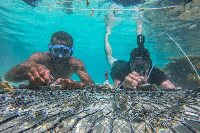 A U.S. Army Soldier and a Fijian soldier transplant a piece of healthy coral by fixing it to a steel grate with cable fasteners during a coastal and reef revitalization project for Exercise Cartwheel 2019, near Nadi, Fiji, Aug. 13. Both the Republic of Fiji Military Forces and the U.S. Indo-Pacific Command's defense strategy is to addresses climate change.