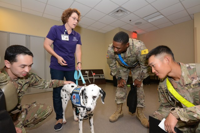 Soldiers pet a working therapy dog brought by volunteers with Paws 4 Hearts.