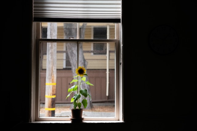 A sunflower sits on the windowsill in the legal office's break room at the Presidio of Monterey, Aug. 28, 2019.